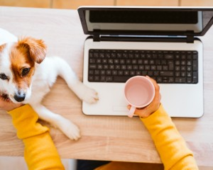 Person working from home with their laptop and dog.